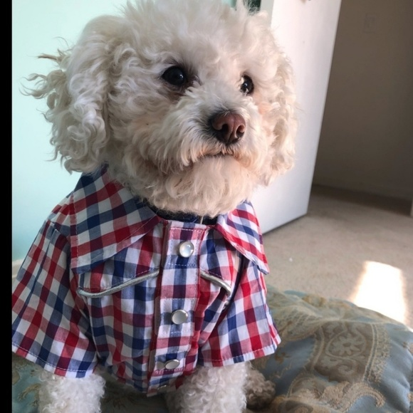 Small Dog Western Shirt New